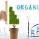 Organic-SEO